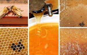 miód od pszczelarza sprzedaż