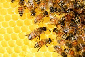 sterylizacja wosku pszczelego