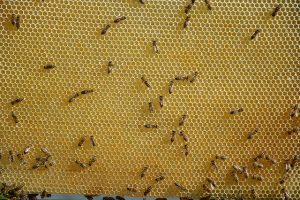 3. Naturalna węza pszczela - Api-inhalacje.pl