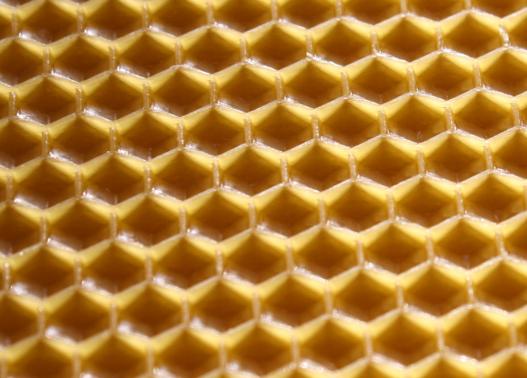 węza pszczela komórki
